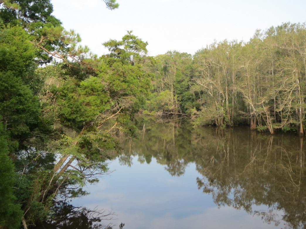 The blackwater Escatawpa River is one of the highlights of hiking the trail of the same name.