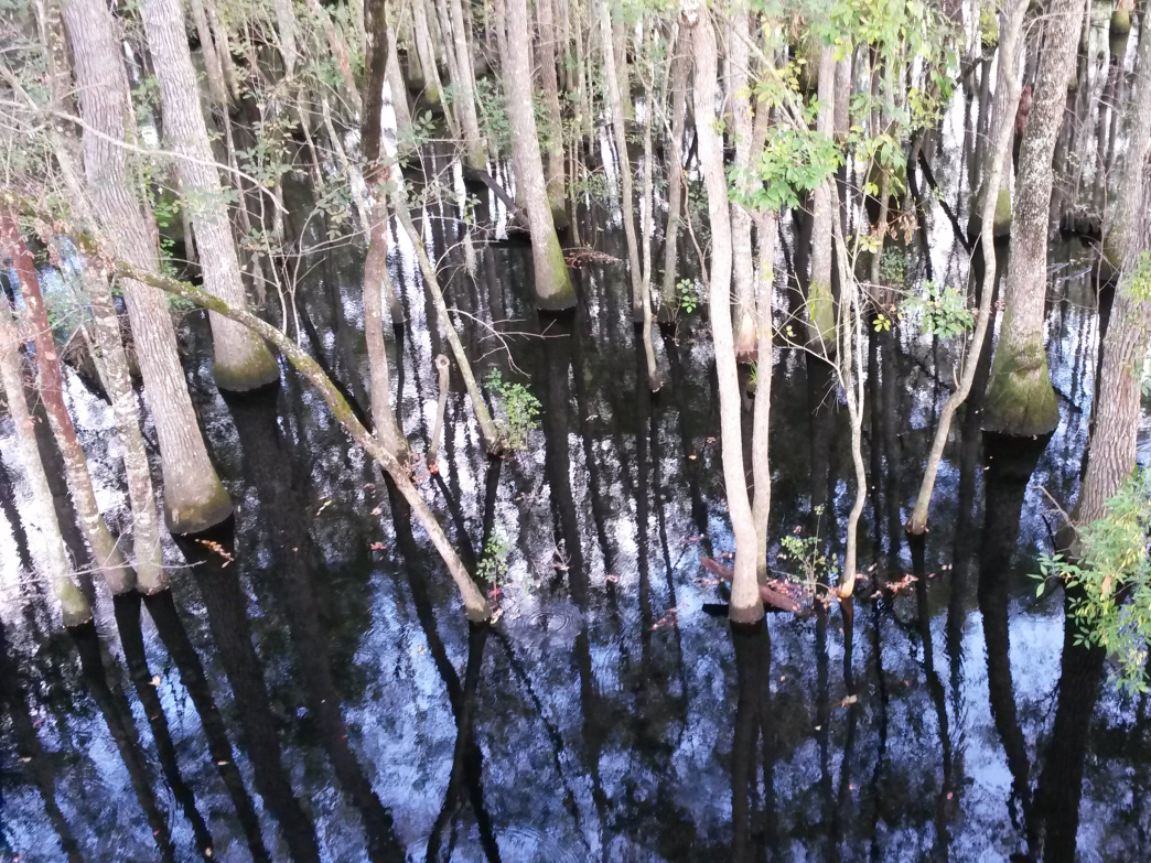 Zip lining takes on a different look when flying over a blackwater swamp.