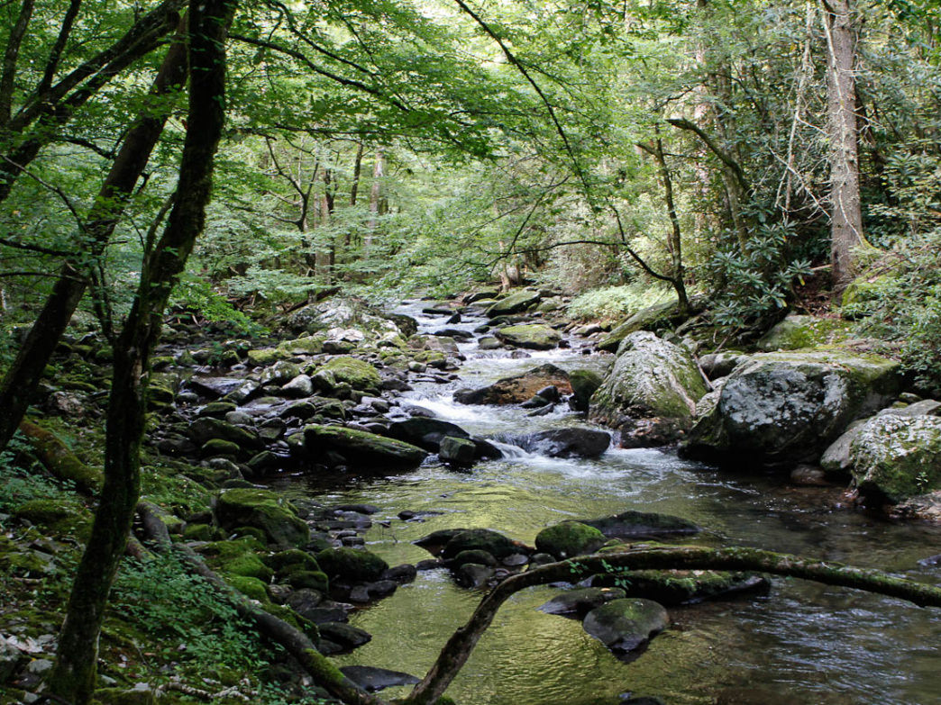 The Joyce Kilmer-Slickrock Wilderness is remote, challenging, and worth the effort for an experienced explorer.