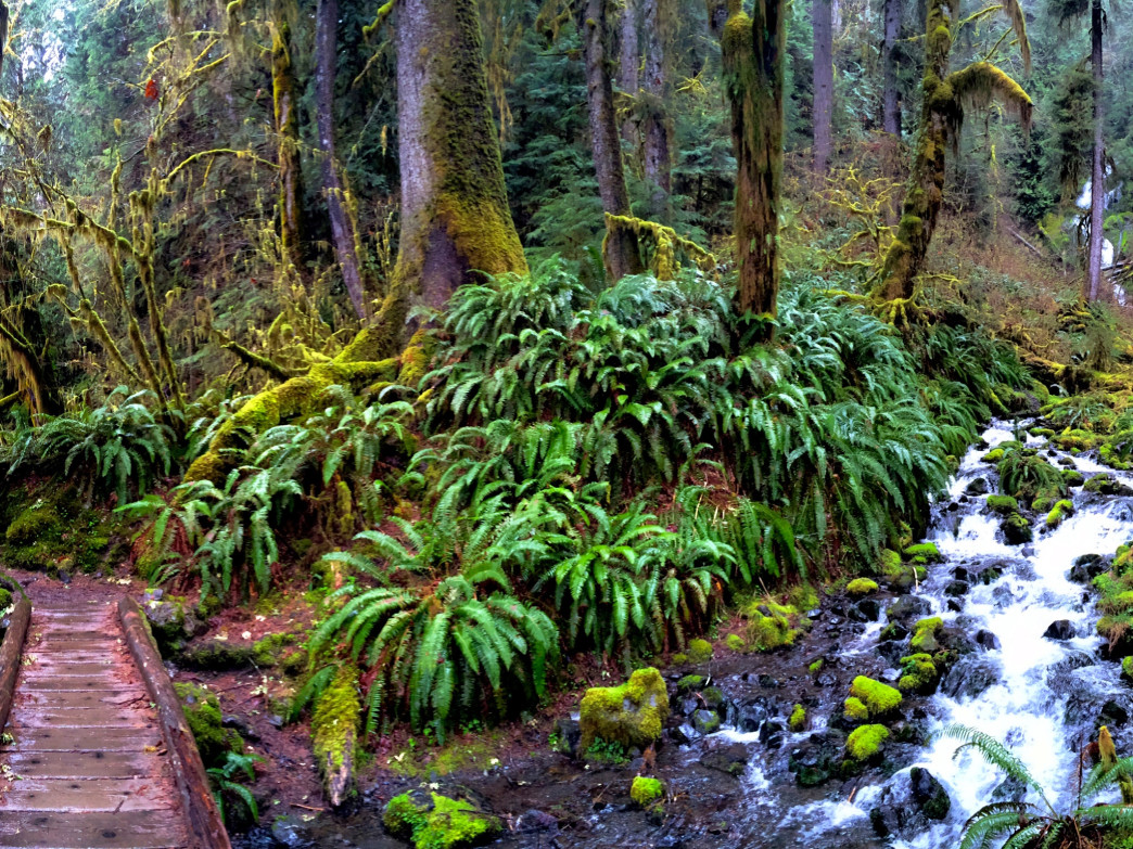 The well-known Hoh Rainforest is a classic for a reason.