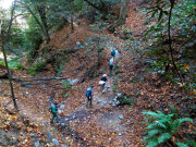 Image for Mt Wilson Trail - Hiking