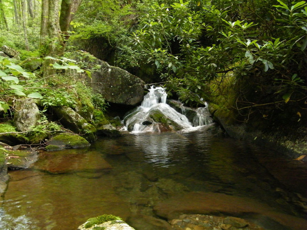 The Forney Creek Trail has several waterfalls along the way to Clingmans Dome.     Margie Hunter