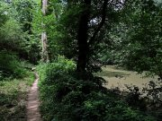 20170609_Tennessee_Chattanooga_Audubon Acres_Hiking7