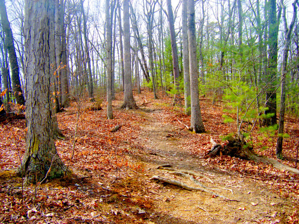 The trail weaves through a sizeable slice of the George Washington National Forest.