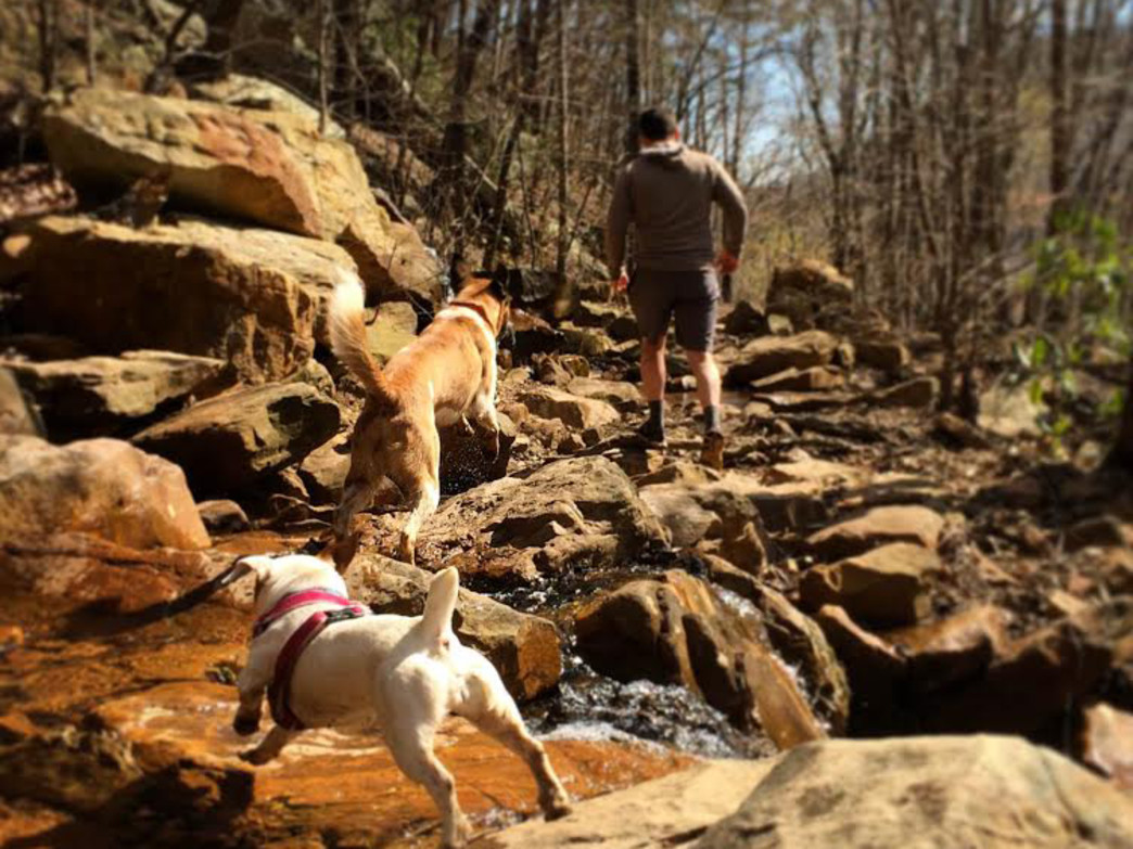 The best trails for dogs have plenty of water sources.