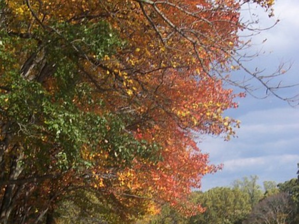 Lorimer Park offers some less-crowded trails to enjoy the foliage.