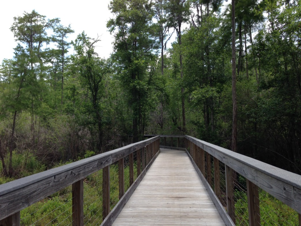 Walking over the wetlands on the Cypress Pond Trail.
