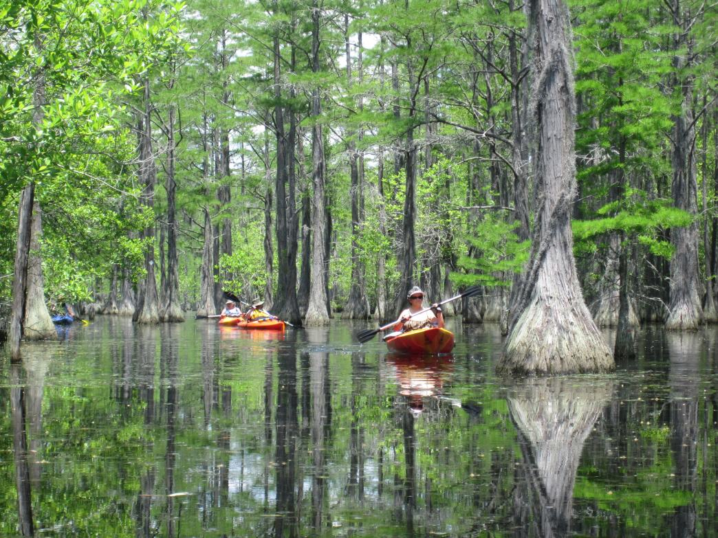 6 Great Paddling Trips In Georgia State Parks This Fall