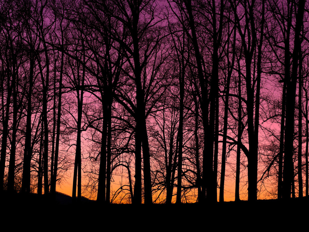 Sunset in the Biltmore forest.