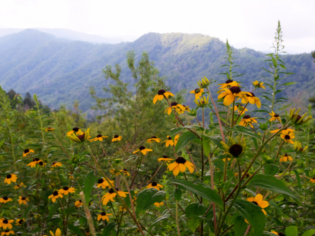 Summer blooms along a Smoky Mountain hike.