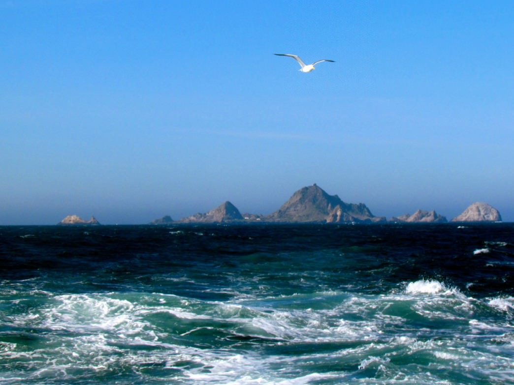 The Farallon Islands have one of the largest great white shark populations in the world.