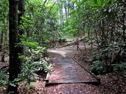 20170705_Cherokee National Forest - Clemmer Trail_Hiking6