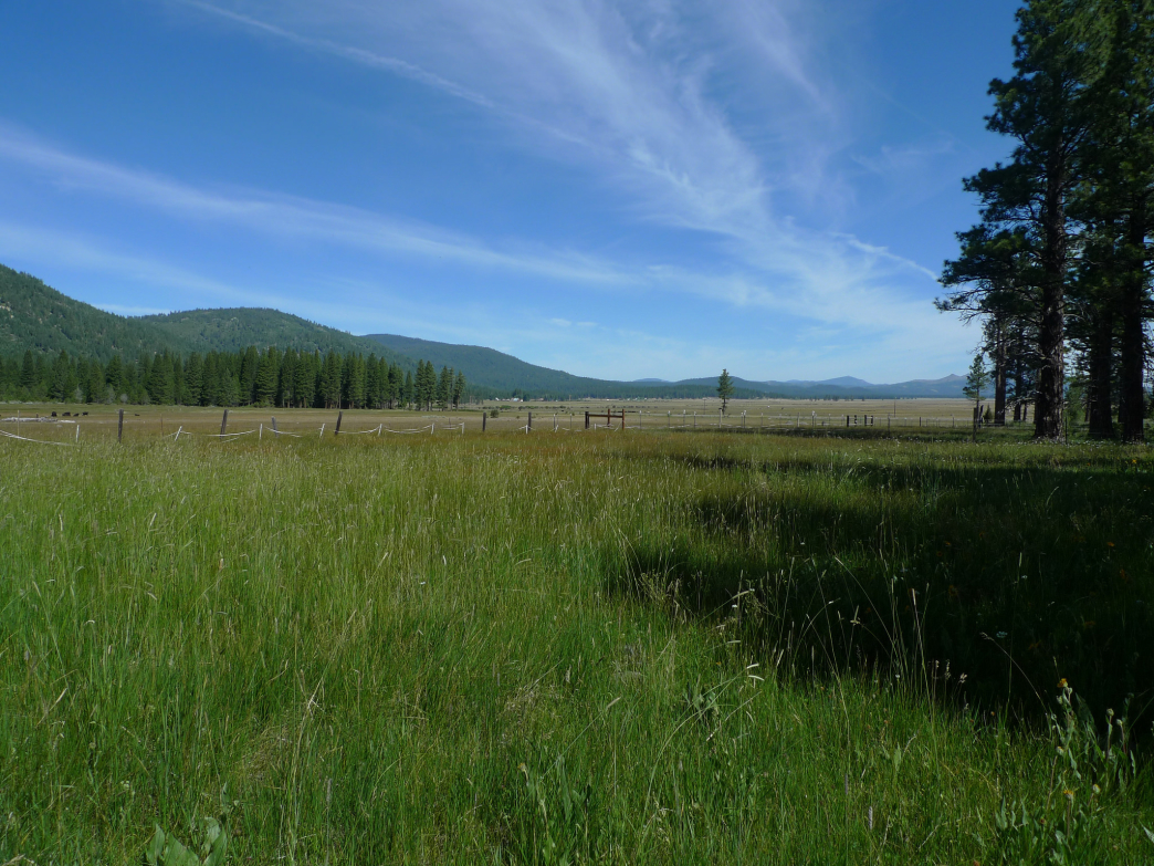 Early summer in the Sierra Valley
