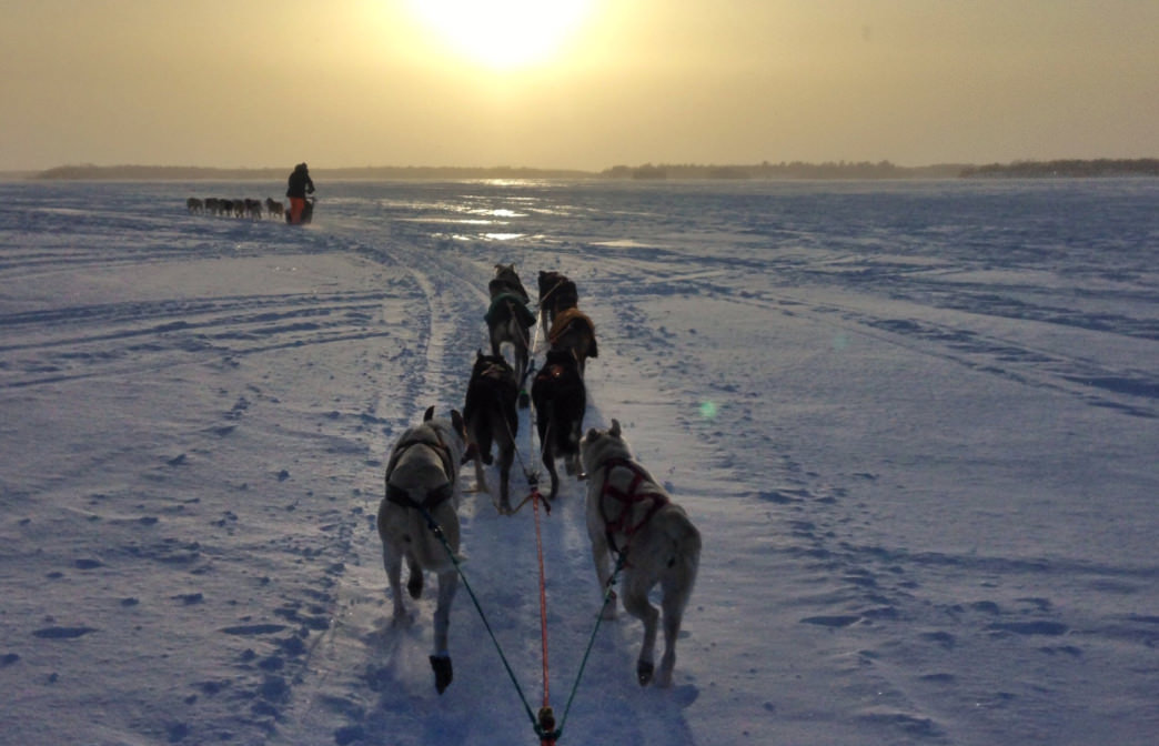 Positive Energy Outdoors offers 2-hour rides and full-day mushing experiences, as well as custom trips.