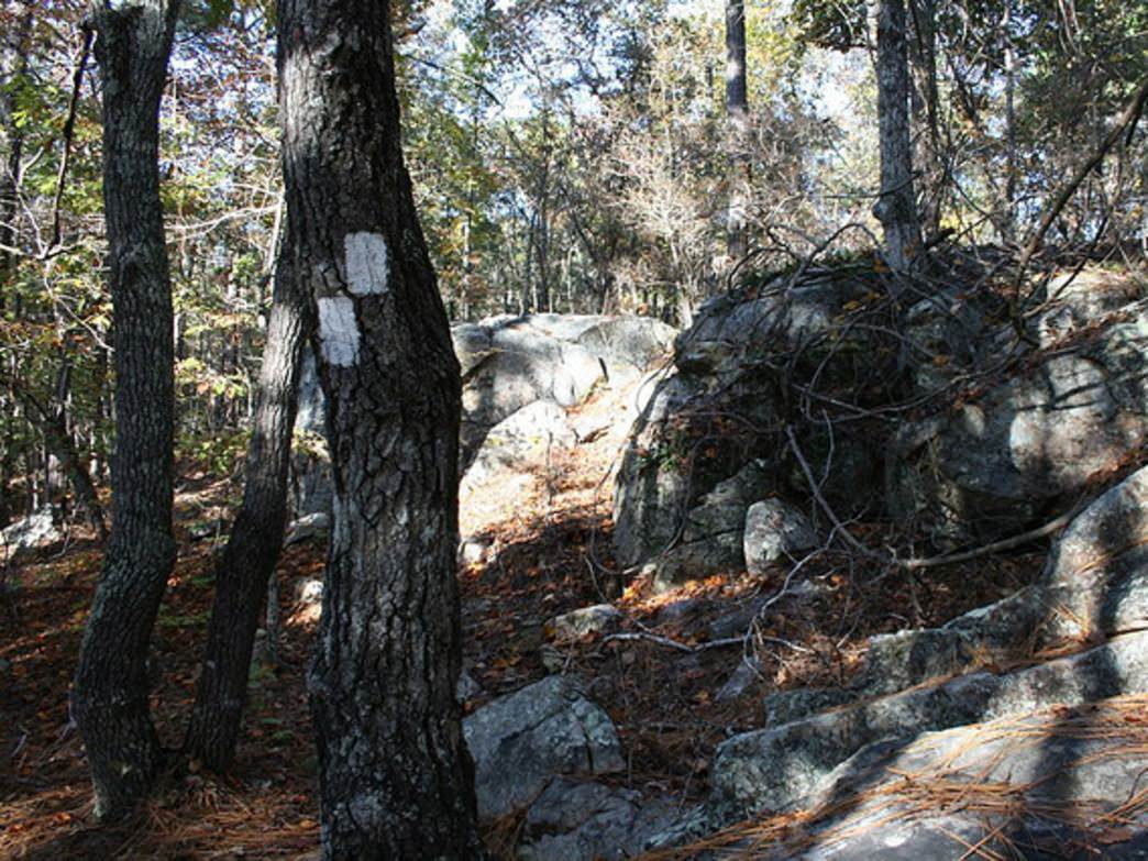 The Cherokee Alpine Ridge Trail is one of the most diverse in the area.