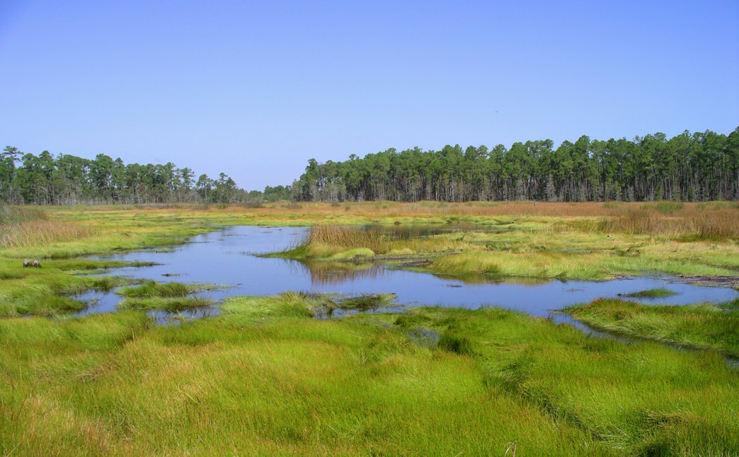 The Grand Bay National Estuarine Research Reserve features more than 18,000 acres to explore.