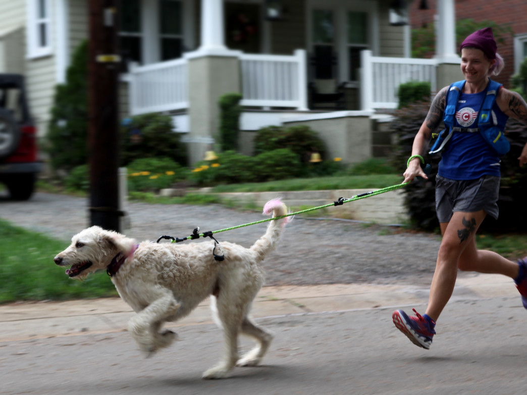 After an initial burst of energy, most dogs will settle into a nice, steady running pace