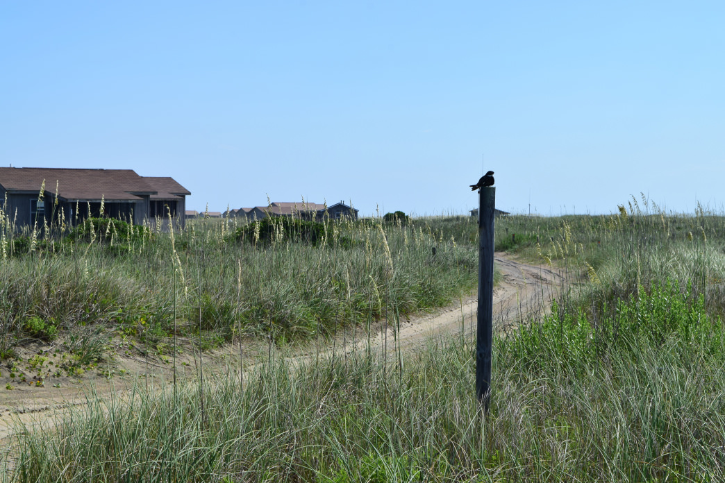 The rustic cabins of Cape Lookout National Seashore.     Jennifer Jones