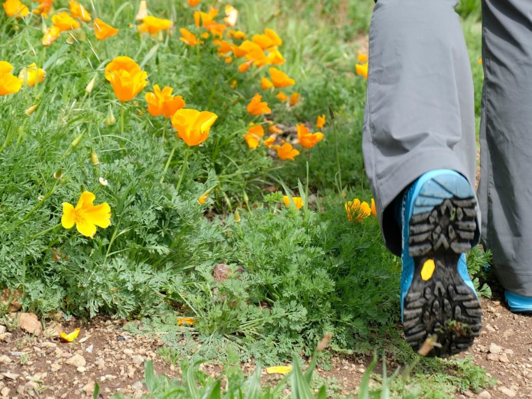 Gran your hiking boots and enjoy the beauty of the Bay Area's trails.