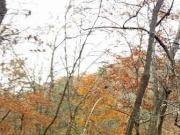 Image for Sope Creek Trail