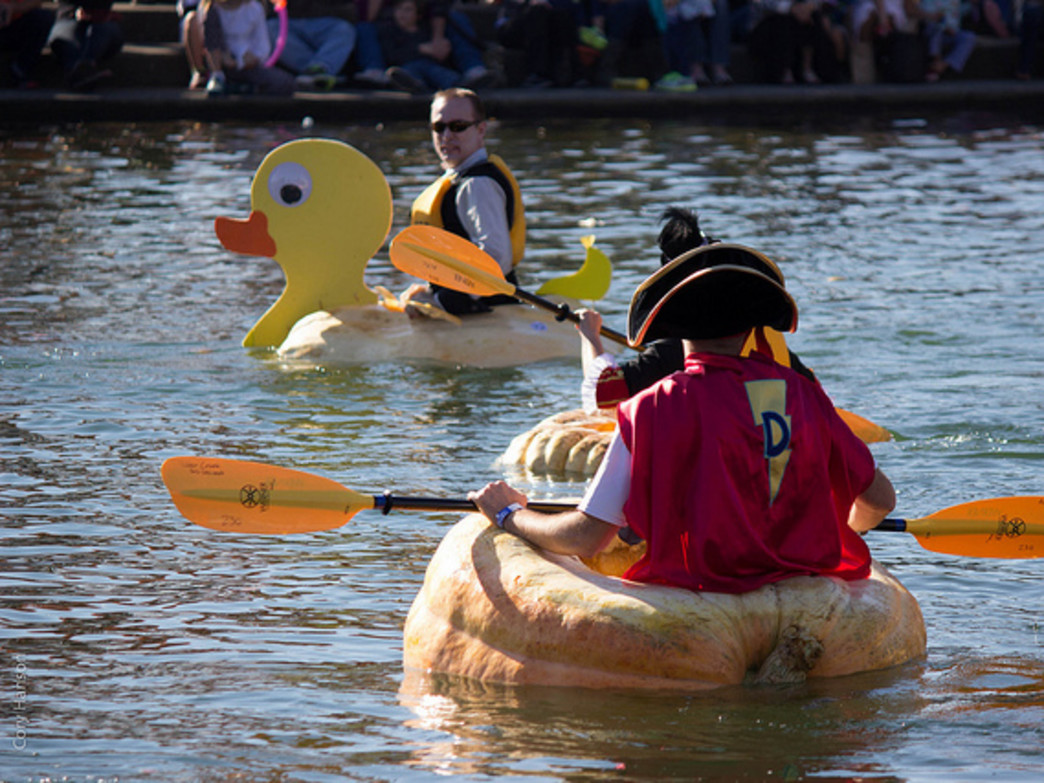 The West Goast Giant Pumpkin Regatta is an annual even in which paddlers race hollowed-out pumpkins at Tualatin Lake of the Commons.
