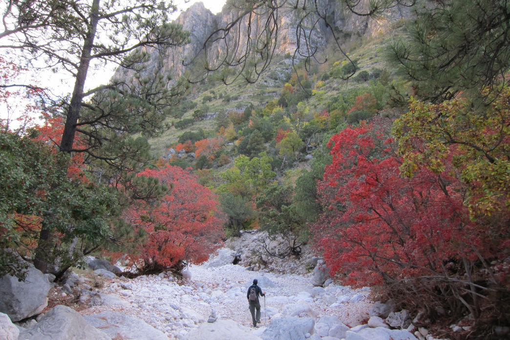The blazing foliage of Guadalupe National Park offers splash of color in desert.      Unknown