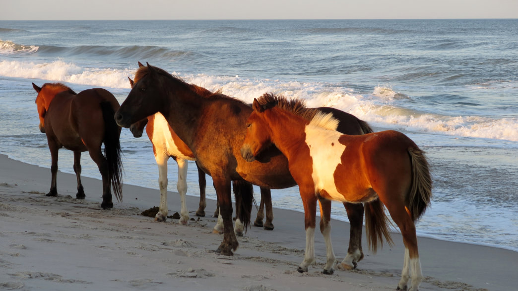 No trip to Maryland is complete without visiting Assateague Island.