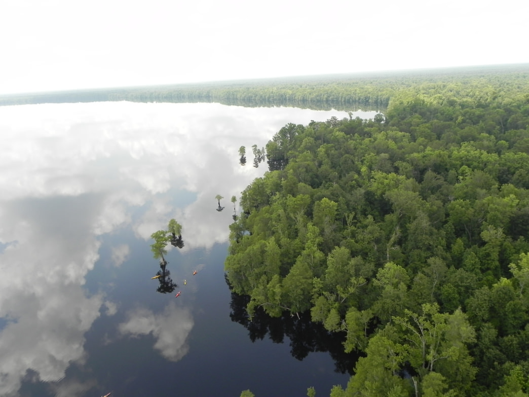 Minuscule kayakers paddling in Virginia's vast Great Dismal Swamp.
