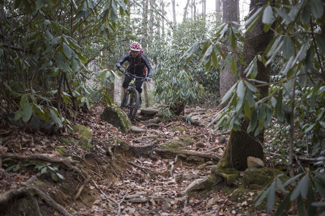 Cove Creek Daniel Ridge Mountain Biking