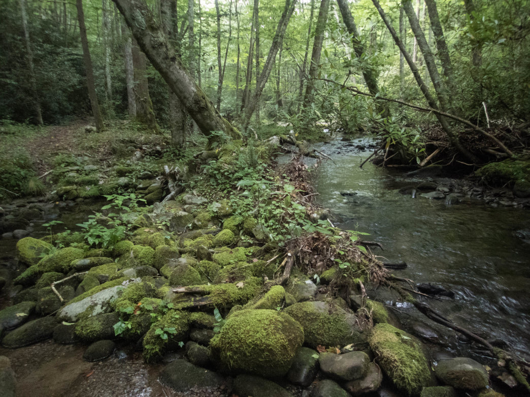 Eagle Creek Trail has little gain before a near-vertical ascent to Spence Field at the end of a 15-mile jaunt.      Clay Duda