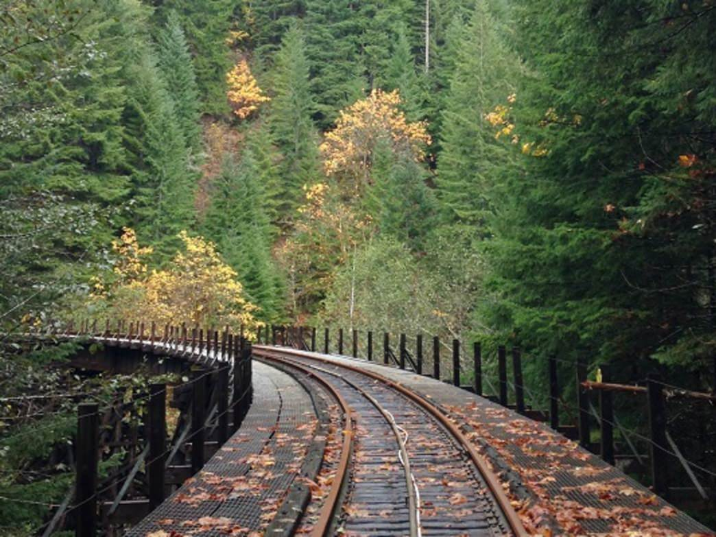 The Wolf Creek Trestle offers hikers a new view of the Salmonberry River canyon's thick forest.