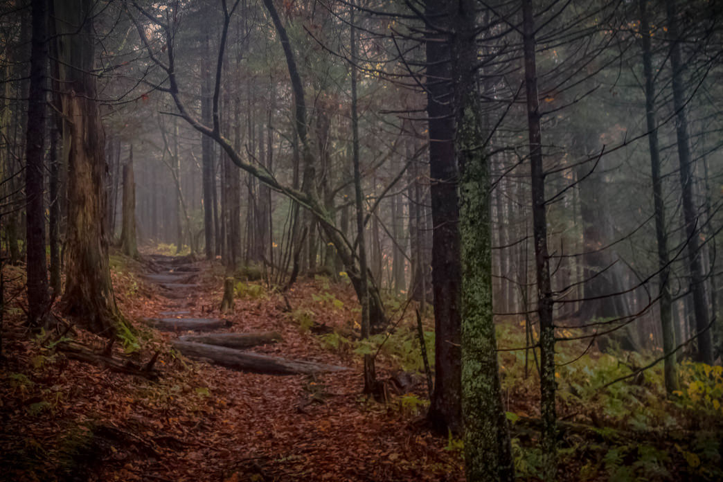 Autumn on the Appalachian Trail.     Kristi Parsons