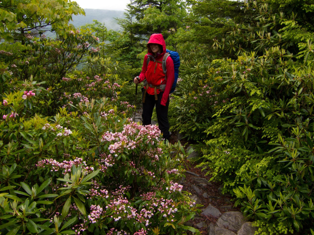 Rain, fog and mountain laurels along the Rohrbaugh Trail