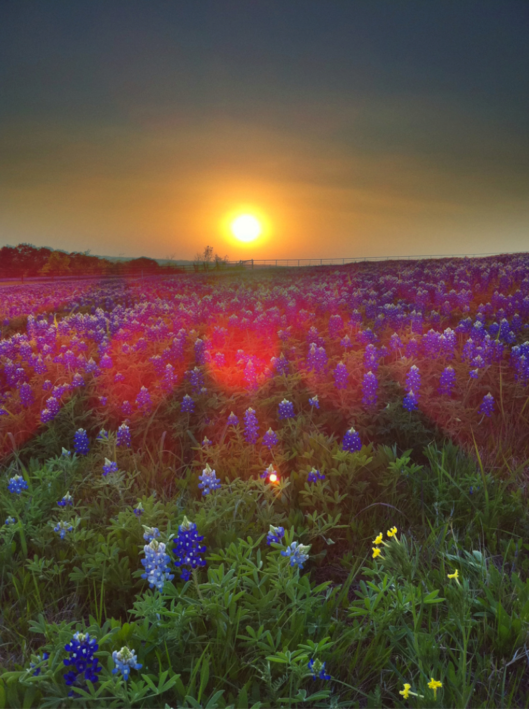 Wildflowers in the texas hill country izmirmasajfo