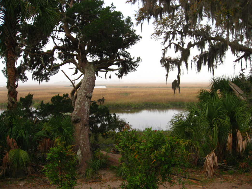 Lowcountry Marsh