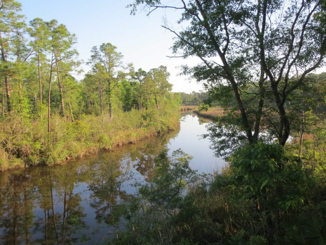 The Fontainebleau Trail at the Mississippi Sandhill Crane National Wildlife Refuge leads to the banks of Davis Bayou.