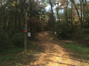 AUM wooded trail