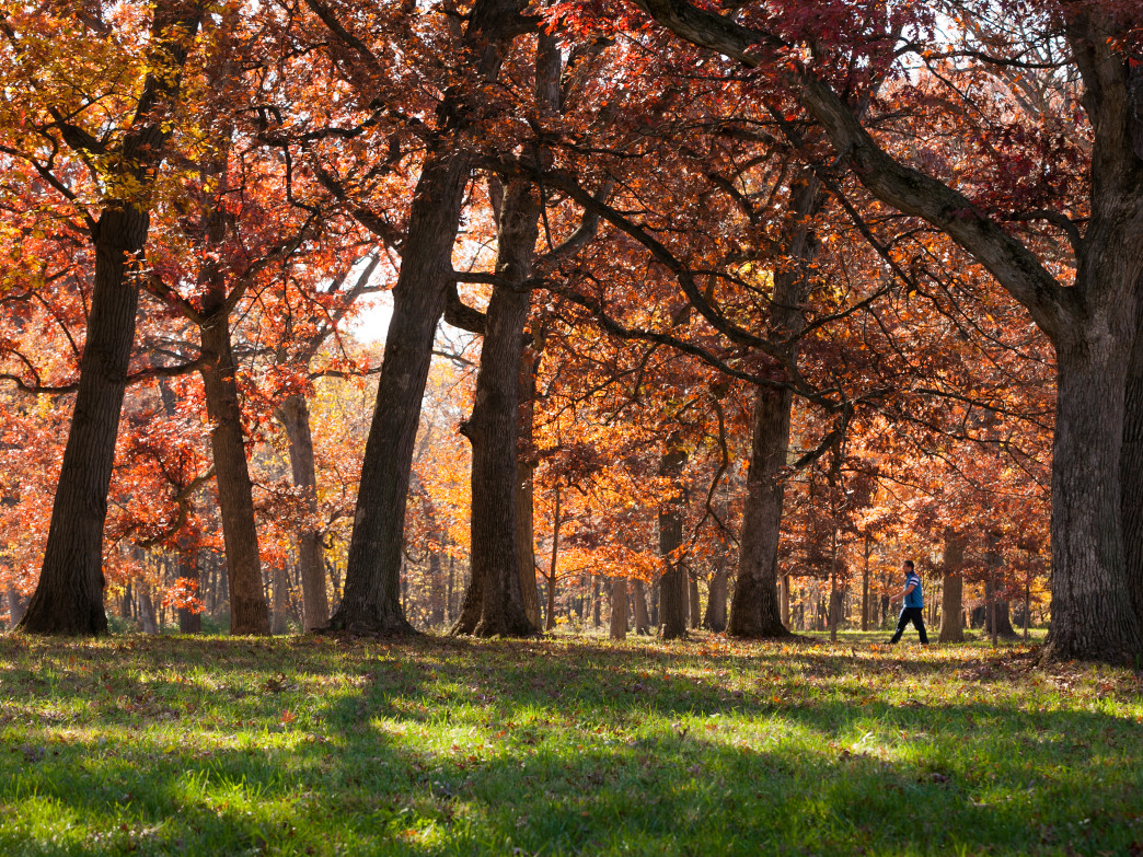 You'll find a huge variety of trees at the Morton Arboretum.