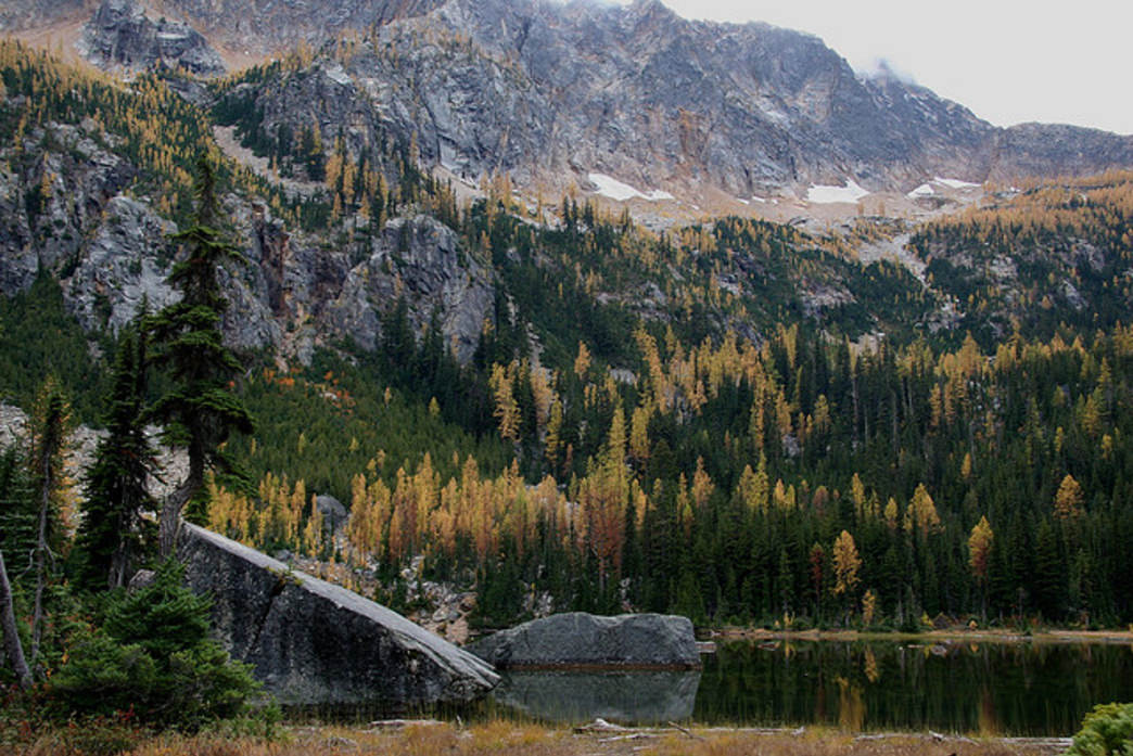 The needles of the larch trees found throughout the North Cascades turn an elegant gold each fall.