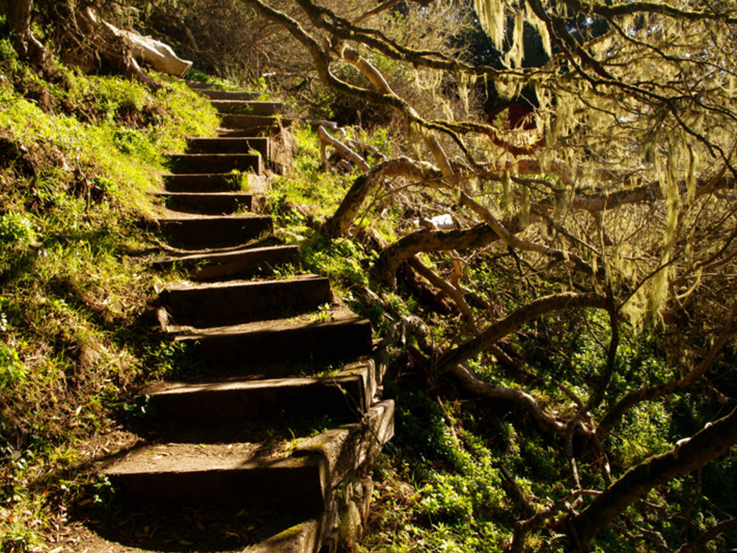 A mossy staircase on the Matt Davis Trail at Mt. Tamalpais State Park s great inspiration for a turkey-busting trail run.