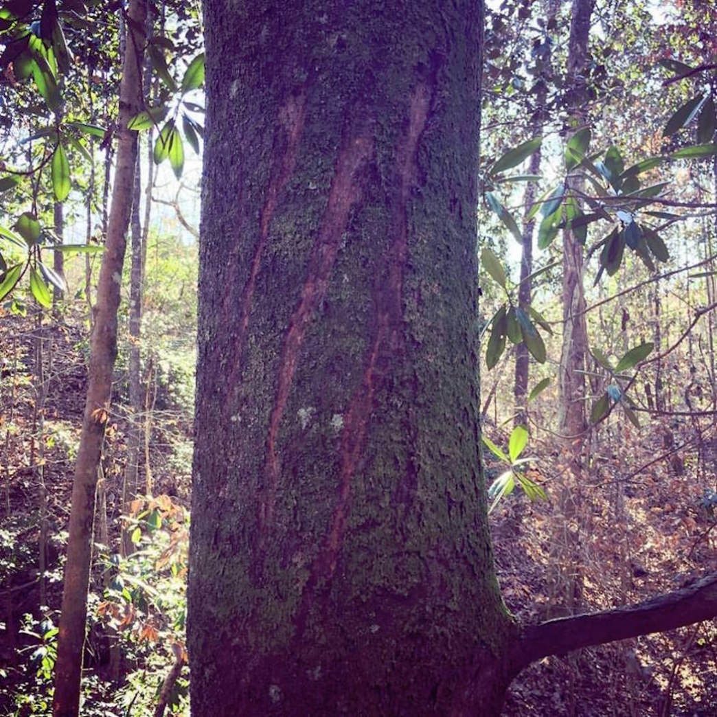 One of the state's more interesting findings: a set of huge claw marks made by something very big in a tree in Escambia County, discovered in January 2017.