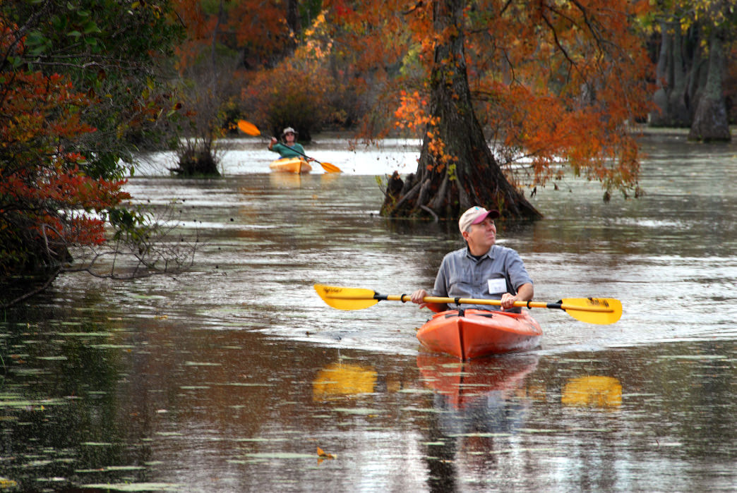 Weaving through immense cypress trees at Merchants Millpond is an experience every paddler should have.