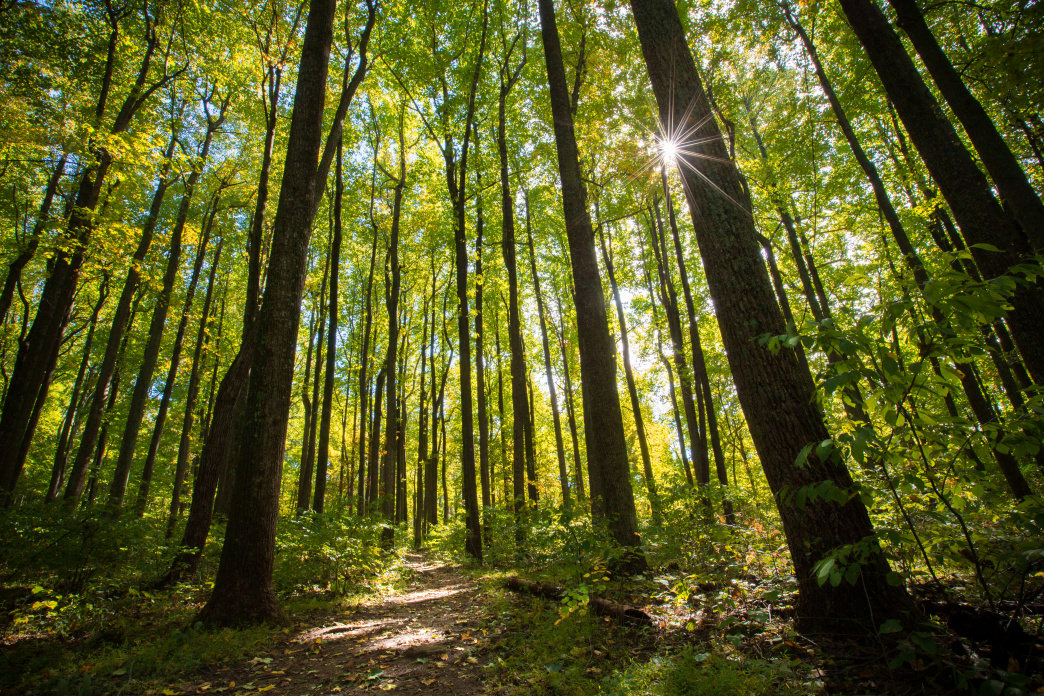 Shenandoah National Park features some of the best hiking trails in the country.