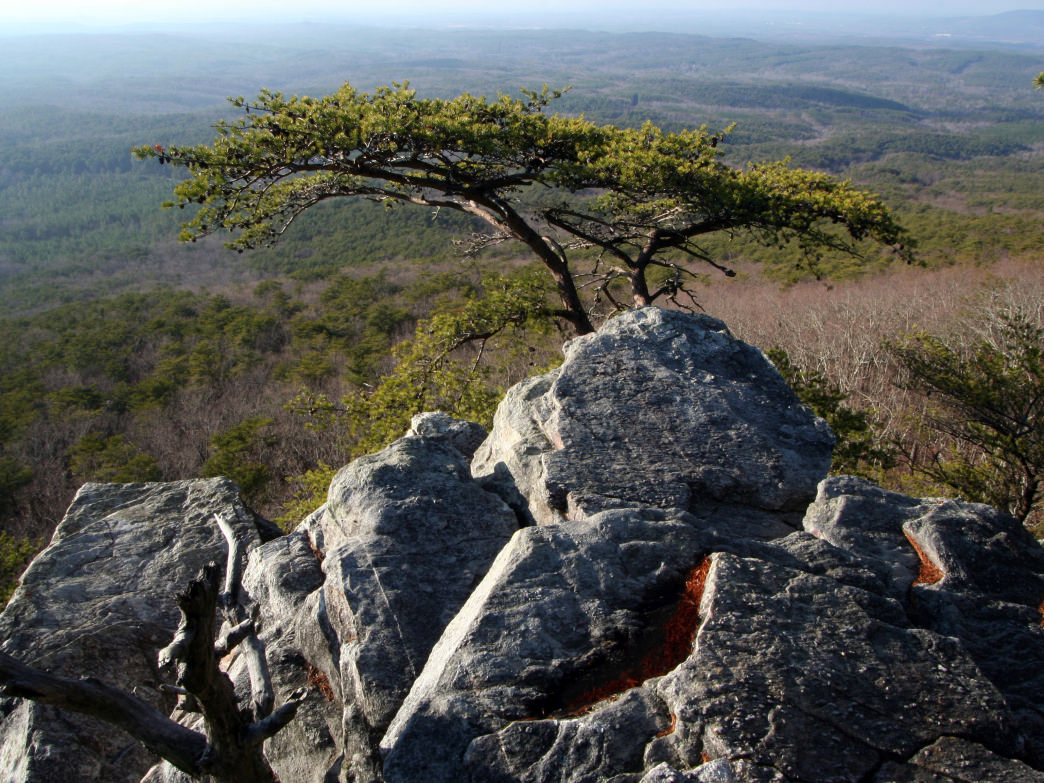 Alabama Cheaha.