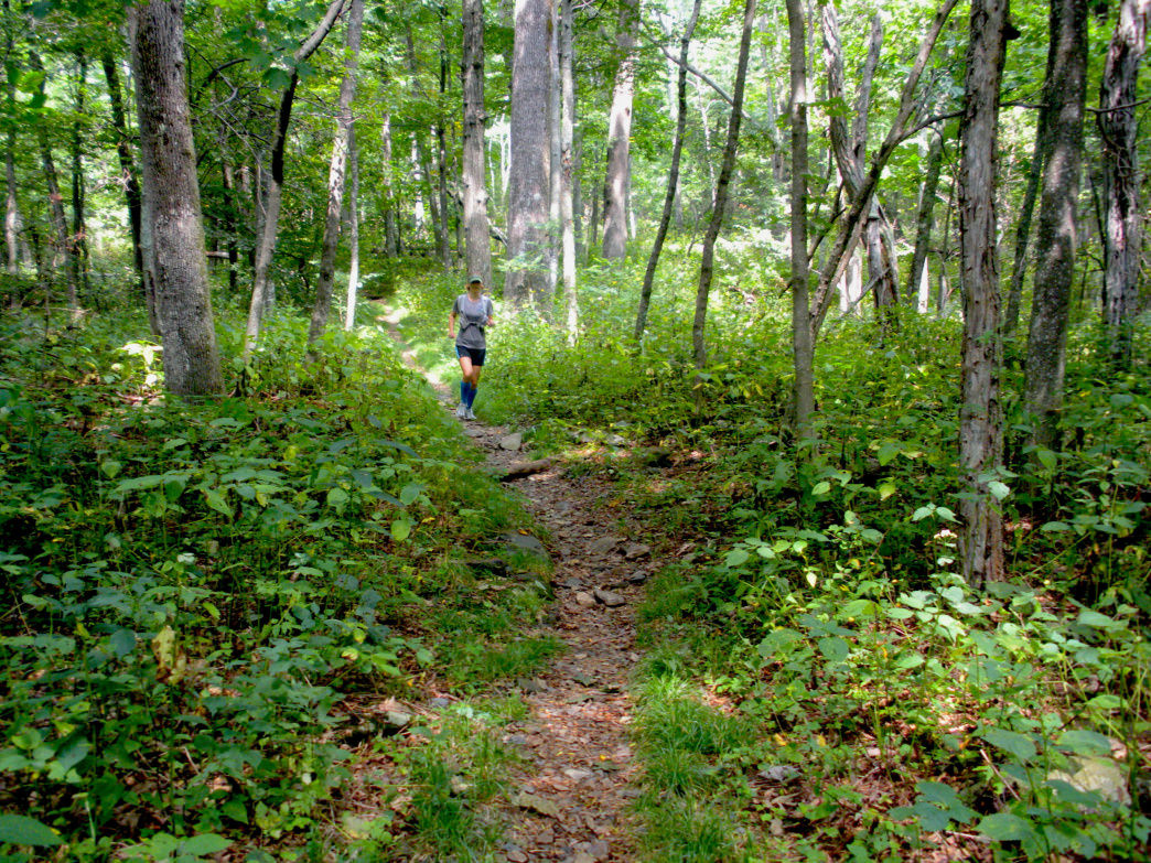 Asheville runners can explore well-maintained sections of the Appalachian Trail.