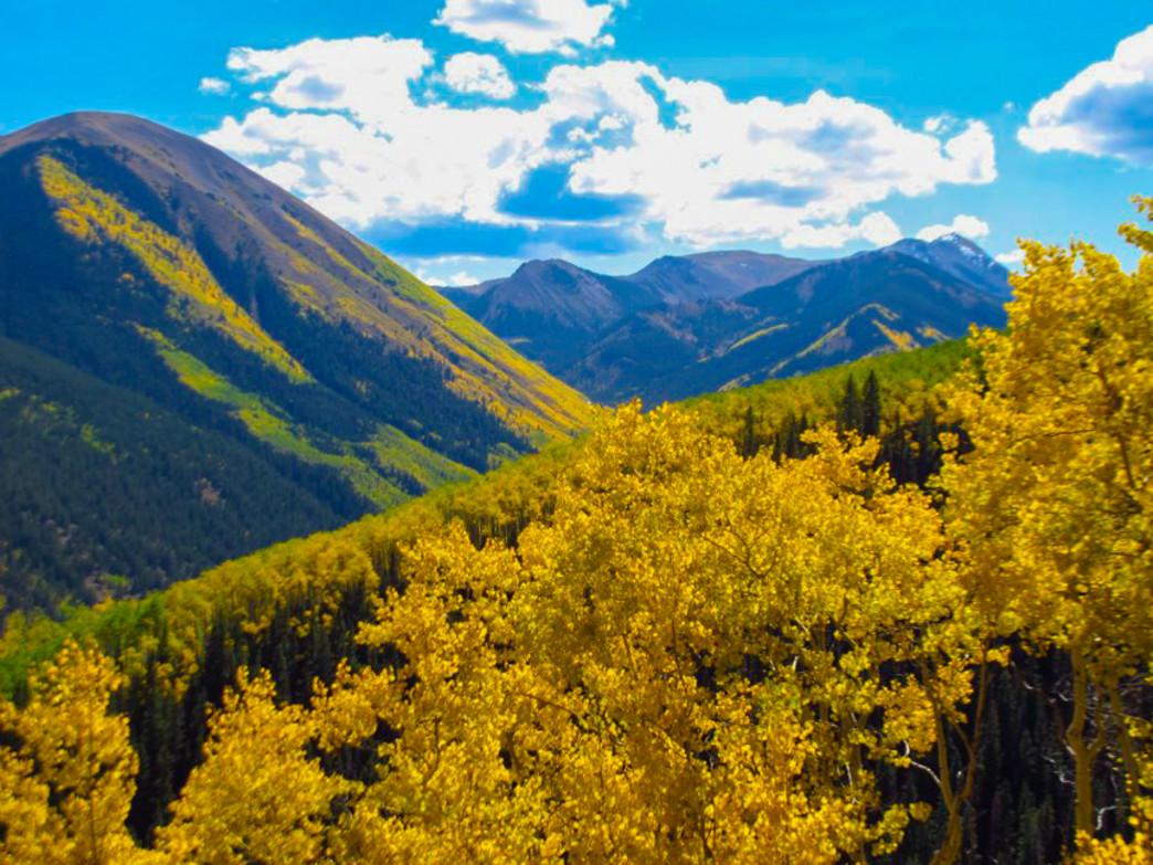From the trail to American Lake you can look back across the slopes at aspen trees groves stretching all the way across the valley.