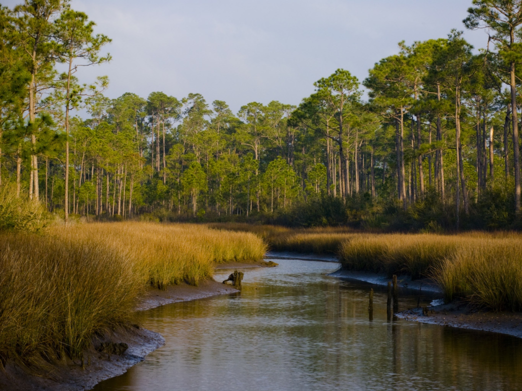 Tidal rivers in Grand Bay National Wildlife Refuge offer pristine places to enjoy the wilderness.