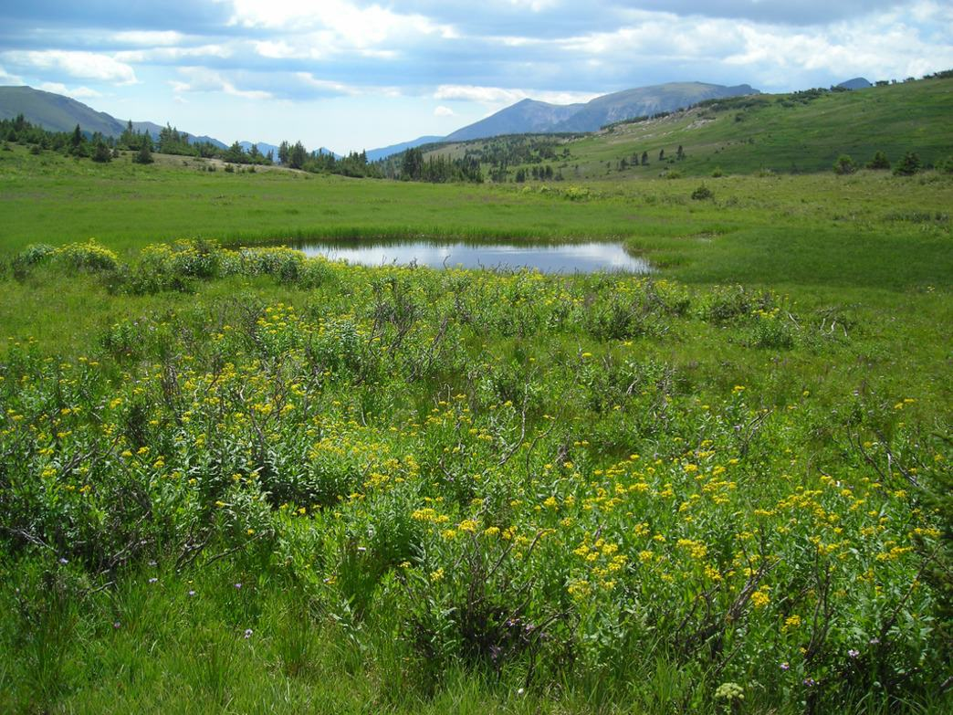 Aspen's stunning open spaces set the backdrop for the Aspen Backcountry Marathon.