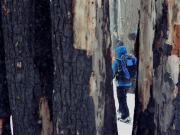 Image for White River Snowshoeing