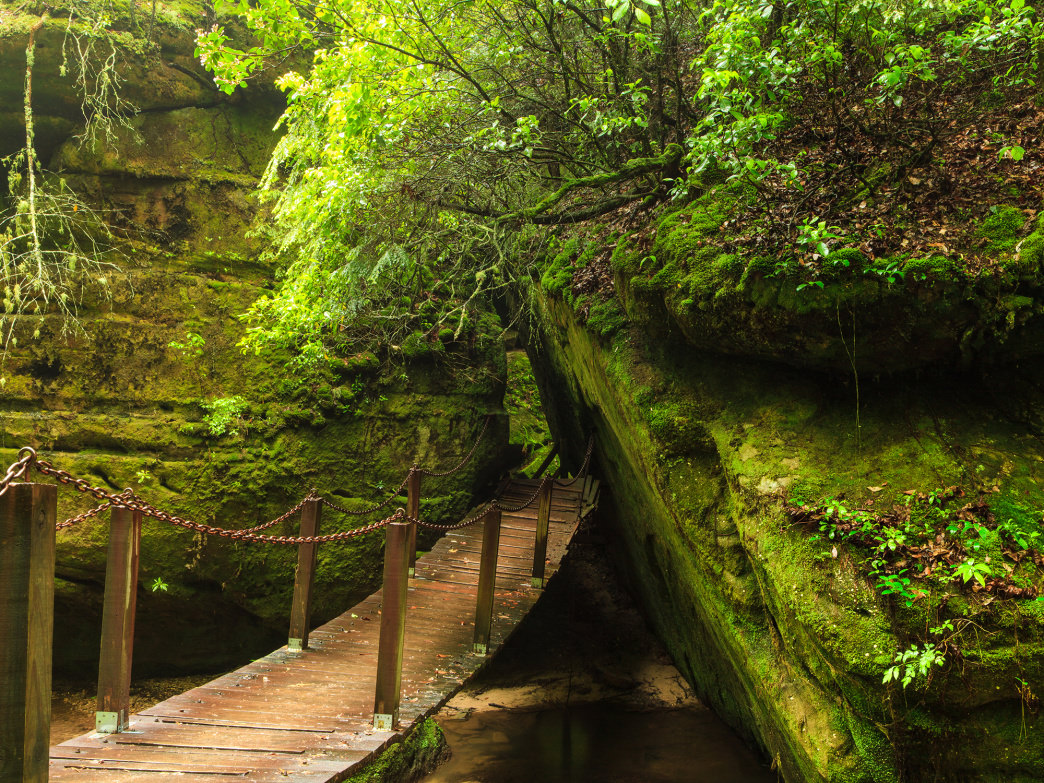 The Dismals Canyon in Phil Campbell is a must-see stop for you and your family.